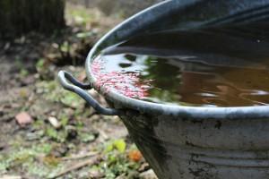 Tauchpumpe für Regenwasser
